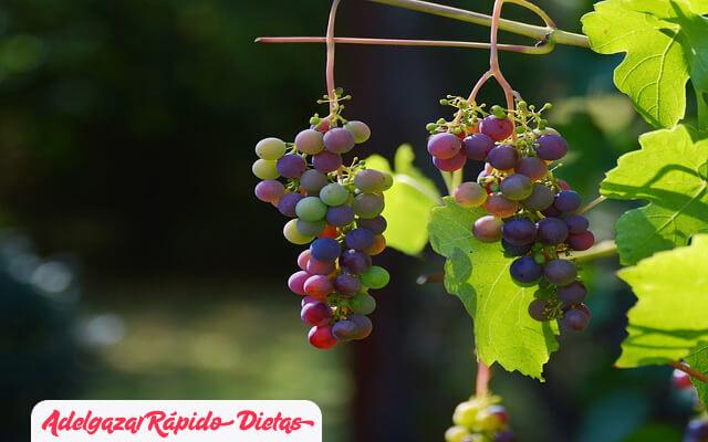 Uva muscadina para bajar de peso naturalmente